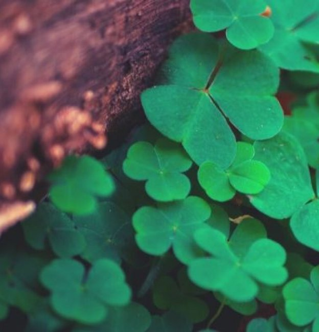 101 St. Patrick's Day Quotes & Irish Toasts to Use for Celebrations