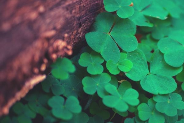 St. Patrick's Day Quotes image